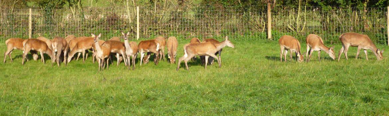 slider-deer-1170