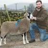 Sucess At Hawes In Lamb Ewe Sale